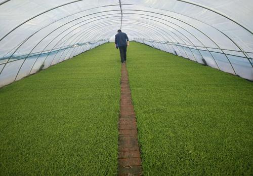 水稻育苗基质